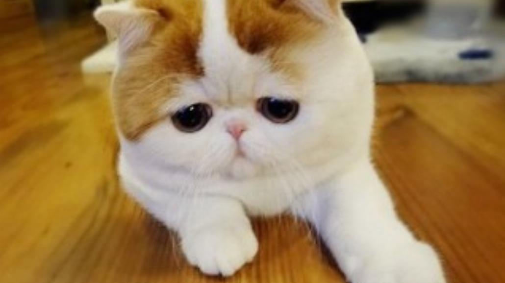 Najsłodszy kot Internetu? Snoopy podbija Instagram