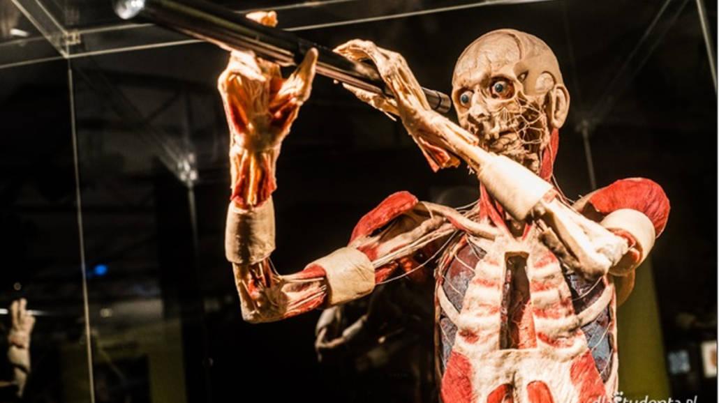 Wystawa Body Worlds Vital w Krakowie