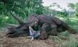 Jurassic Park - zdjęcia z planu  - Zdjęcie nr 1