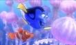 Gdzie jest Nemo?  - Zdjęcie nr 4