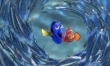 Gdzie jest Nemo?  - Zdjęcie nr 3