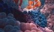 Gdzie jest Nemo?  - Zdjęcie nr 1