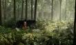 Księga dżungli - zdjęcia z filmu  - Zdjęcie nr 5