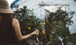 Zrywanie owoc�w & zbieranie warzyw