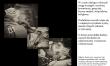 Wystawa Nerkowcy  - Zdjęcie nr 5