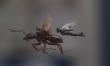 Ant-Man and the Wasp - zdjęcia z filmu  - Zdjęcie nr 2