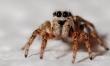 Arachnefilia