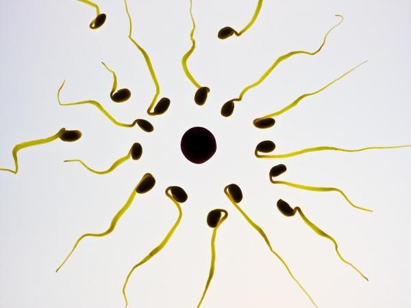 Sperma jest niskokaloryczna! Tylko pięć kalorii zawiera 1 łyżeczka tej substancji
