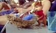 Alvin i wiewiórki 3  - Zdjęcie nr 3