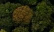Był sobie las  - Zdjęcie nr 4