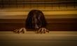 The Grudge: Klątwa - zdjęcia z filmu  - Zdjęcie nr 2
