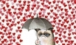 Walentynkowe memy  - Zdjęcie nr 5