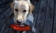 7. Labrador retriever