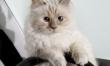 Choupette Lagerfeld w reklamie Opla Corsy  - Zdjęcie nr 4