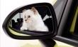 Choupette Lagerfeld w reklamie Opla Corsy  - Zdjęcie nr 2