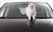 Choupette Lagerfeld w reklamie Opla Corsy  - Zdjęcie nr 1