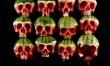 Czaszki wykrojone z arbuza