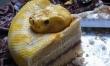 Tortowy wąż