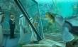 Żółwik Sammy 2  - Zdjęcie nr 3