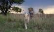 Mia i biały lew - zdjęcia z filmu  - Zdjęcie nr 5