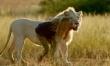 Mia i biały lew - zdjęcia z filmu  - Zdjęcie nr 4