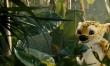 Na tropie Marsupilami  - Zdjęcie nr 3
