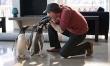 Pan Popper i jego pingwiny  - Zdjęcie nr 3