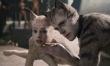 Koty - zdjęcia z filmu  - Zdjęcie nr 5