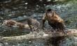 Amazonia 3D. Przygody małpki Sai  - Zdjęcie nr 1