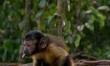 Amazonia 3D. Przygody małpki Sai  - Zdjęcie nr 3
