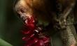 Amazonia 3D. Przygody małpki Sai  - Zdjęcie nr 5