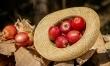 Jabłko - źródło zdrowia