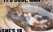 Memy ze śmiesznymi kotami  - Zdjęcie nr 1