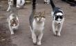 Memy ze śmiesznymi kotami  - Zdjęcie nr 5