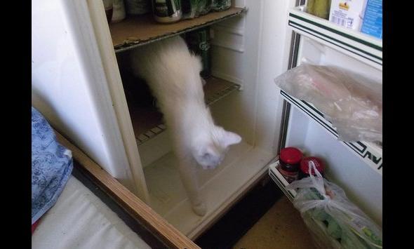 O kotek się znalazł