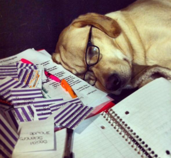 Egzaminy na weterynarii to ciężki kawałek chleba - każdego potrafią uśpić!