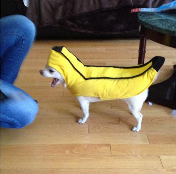 JestĘ bananem !
