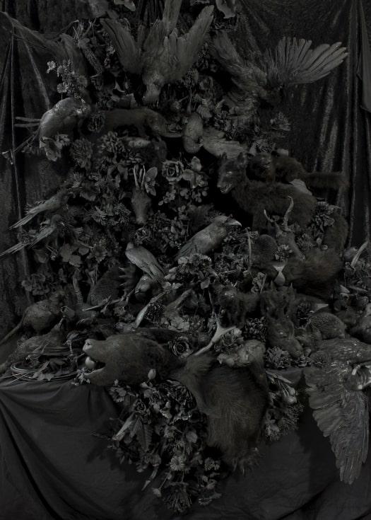 Dawid Czycz: Black Noise