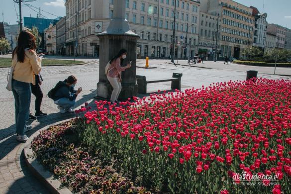 Wiosna zawiała do Poznania