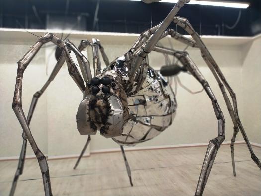 Wystawa pająków w Sky Tower