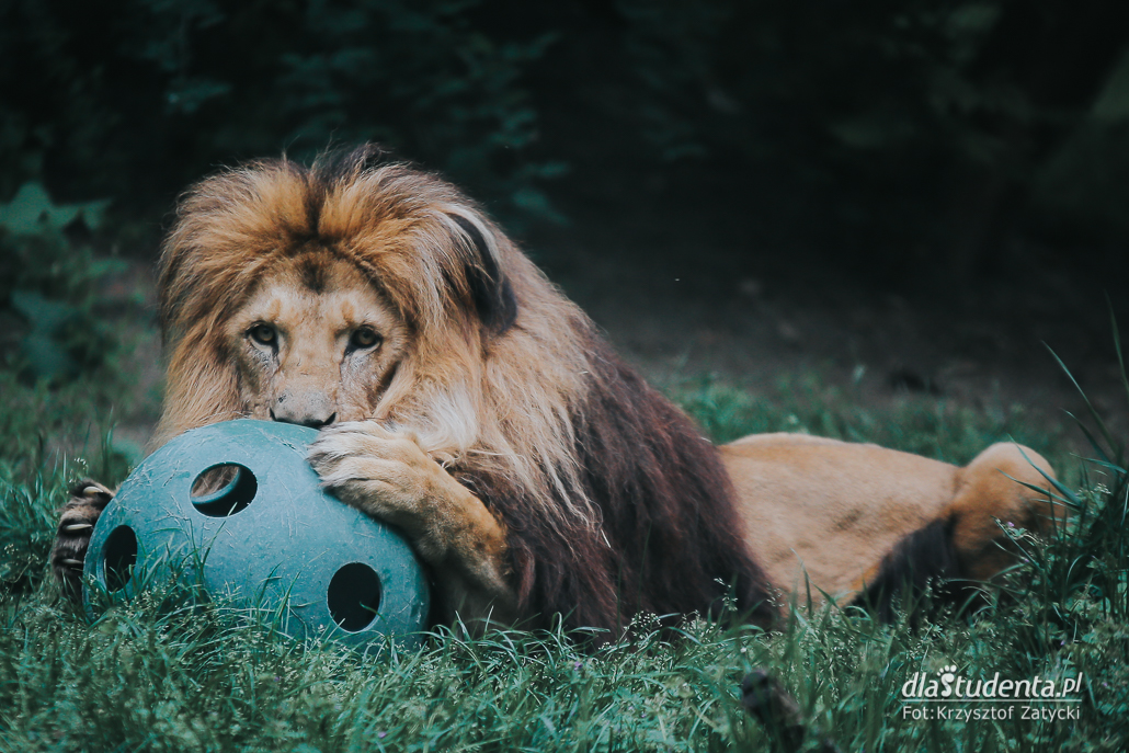 Koronawirus: Zoo we Wrocławiu otwarte po kwarantannie
