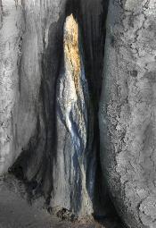 Ewa Brandt. Sekretne życie drzew