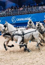 Międzynarodowe Zawody Jeździeckie: Cavaliada 2018