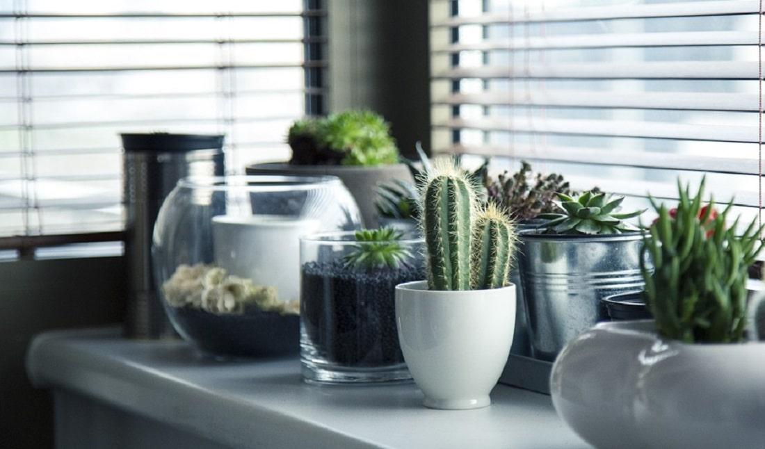 Kaktusy i inne takie
