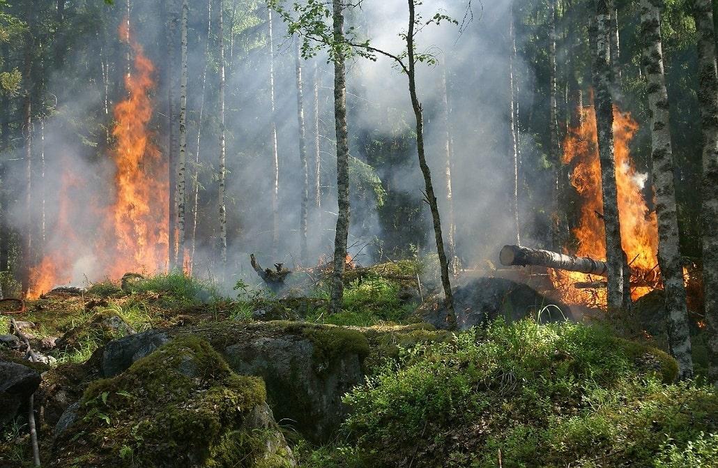 Pożar lasu liściastego