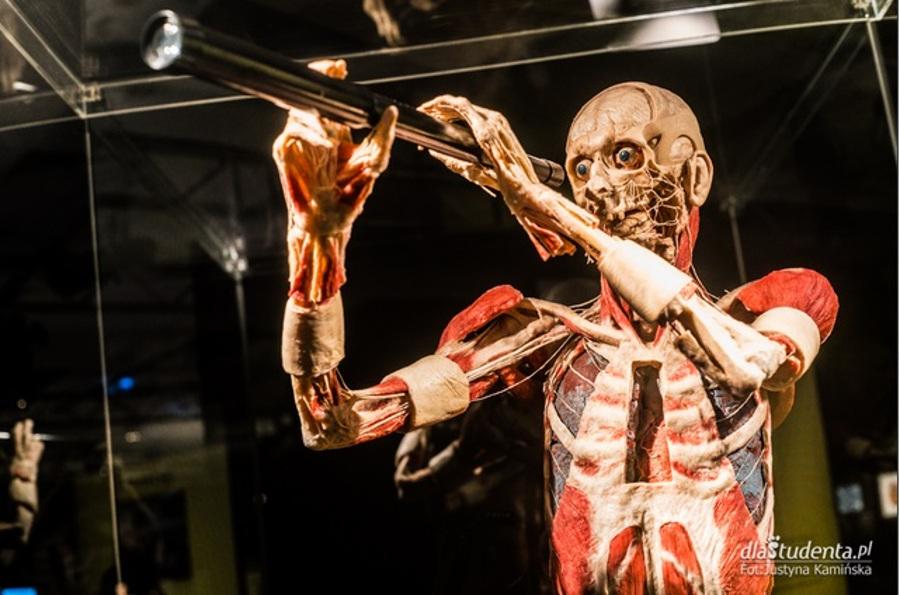 szkielet ludzkiego ciała