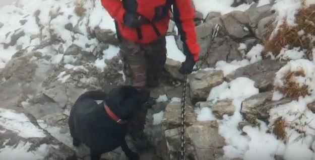 Ten labrador zabłądził i...wszedł na Giewont! Filmik z ratowania psa bije rekordy [WIDEO]