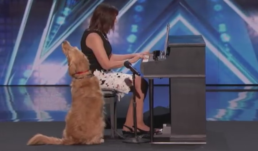 Ten pies naprawdę potrafi śpiewać! Golden podbił serca jurorów Got Talent [WIDEO]