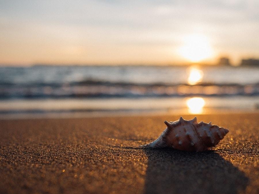 Muszla na plaży, a w tle zachód słońca