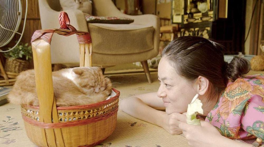 Kot do wynajęcia - filmy z kotami